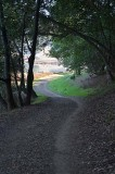 Trail to Marsh