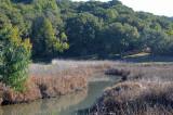 Creek at the Marsh