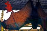 See-through Bat Wing
