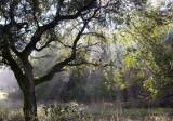 Tree and Light Rays