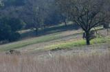 Egret on Hillside