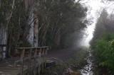Eucalyptus Row