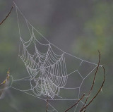 One More Web