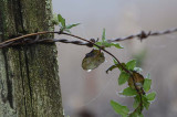 2/8/12: Curled Leaves Dripping
