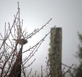 Sparrow in Fog
