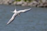 Best Tern Shot