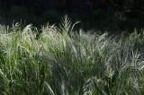 Sunlit Weeds
