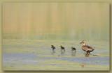 Confident Ducklings