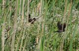 Fly Away Blackbirds