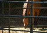 6/27/12:  Horse in Morning Light