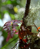 Red Leaves & Lichen