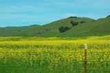 Miscellaneous Views in West Marin