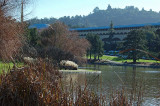 Marin County Civic Center and Pond