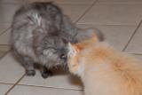 Smokey Meets Yogi!