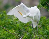 Proud Egret Bows