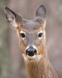 What a Deer!