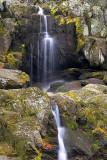 Serene Flow