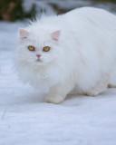 Snow Cat?
