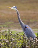 Heron's Neck Stretch