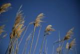 1Blowin in the wind.jpg