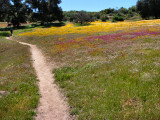 1Color in the Meadow.jpg