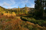 1Creek Larches.jpg