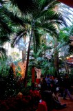 Tropical Rain Forest at The Mirage
