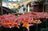 Bellagio Conservatory Spring 2012
