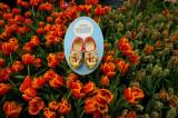 Bellagio Tulips