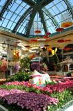 Bellagio Conservatory Sring Flowers