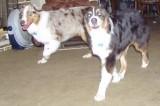 Ajaxs puppies