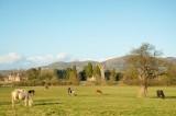 the church, Park farm and the meadow