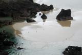 gulls reflecting