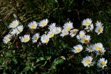 stopping to pick the daisies