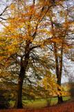 5 minute ration of autumn colour