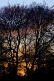 sunset in elms
