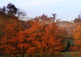 last light on alders