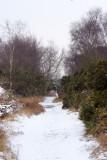 winter walk at walberswick 4