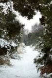 winter walk at Walberswick 1