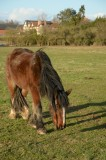horse with Park farm behind