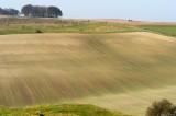 a Wiltshire landscape