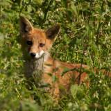 a bit foxed