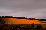 last sun on wheat