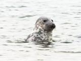 seal spotting humans