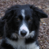 Sam - lovely pup from local organic nursery who also walks our way