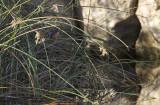 Malachite Kingfisher IMG_0726