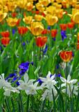 Spring in Duke Gardens