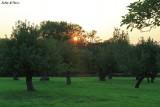 Sleepy orchard