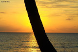 Rising Sun behind the tree