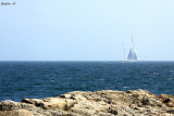 Lonely white sail